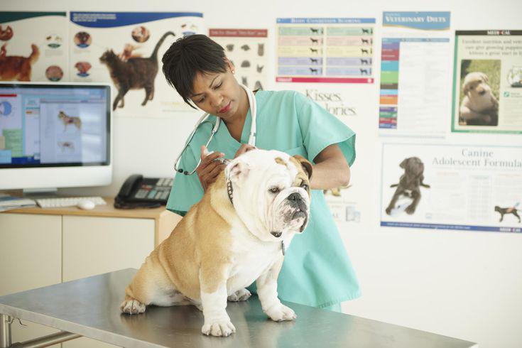 Médicos, Veterinários ou Laboratórios